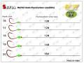 M&W MUTSU hook+Flurocarbon Line(50%)
